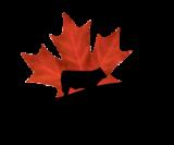 Canada Beef